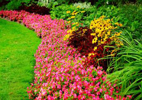 Perennials - Planting - Landscaping